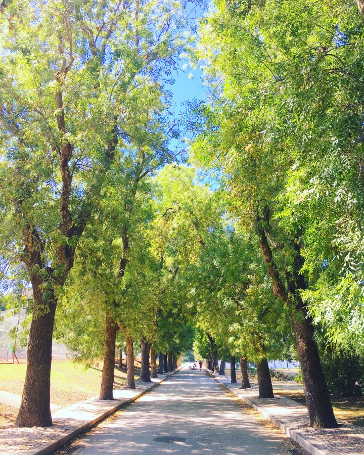 Running in Lisbon - Jamor Complex, The trees